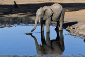 expedition Botswana´19 . 22 jun al 6 jul (Sudafric...